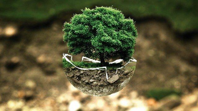 Hoop Carpool celebra el Día Mundial por la Reducción de Emisiones de CO2 entregando 200 árboles a sus usuarios